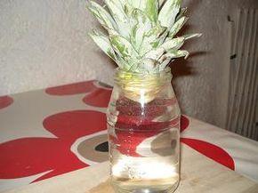 Voici comment faire posser un ananas. Toutes les explications en images pour ne pas rater votre plantation. #ananas #caboucadin