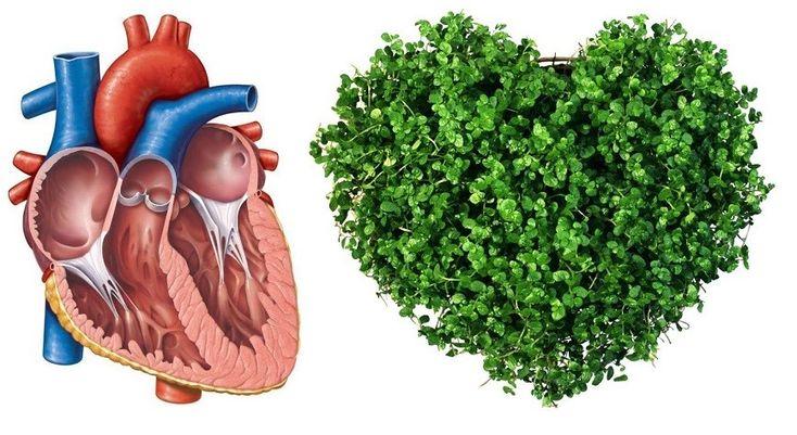 srdce byliny bylinky babske rady caj tinktura mast mazani