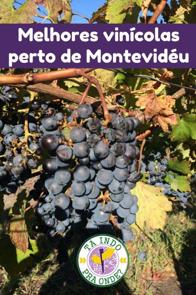 Dicas das melhores vinícolas para visitar perto de Montevidéu - Uruguai!