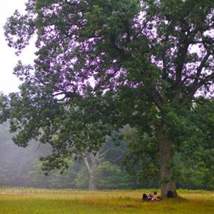 Night Stage Bowl Tree Pretty Purple Peaceful