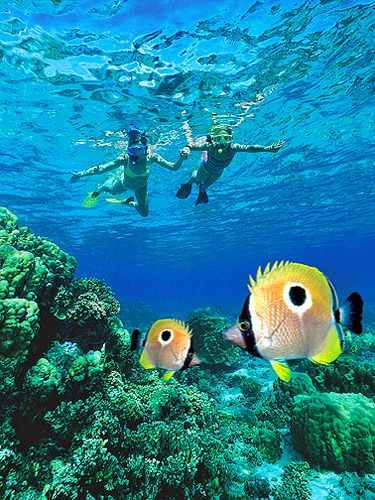Best snorkeling in Kauai | Best Beaches to Snorkel in Kauai - Did this here with Steve in 1996-97. Absolutely breathtaking