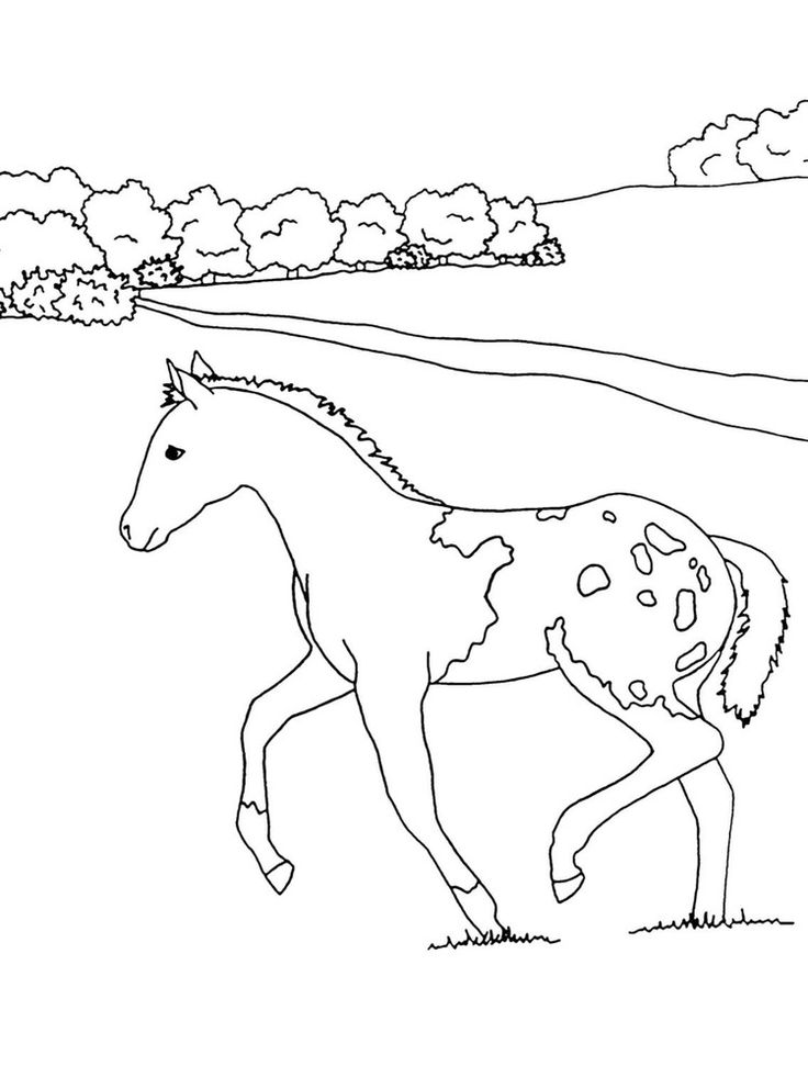 26 best Smaller Horsemen and Women Pages images on Pinterest Have - fresh dayton dragons coloring pages