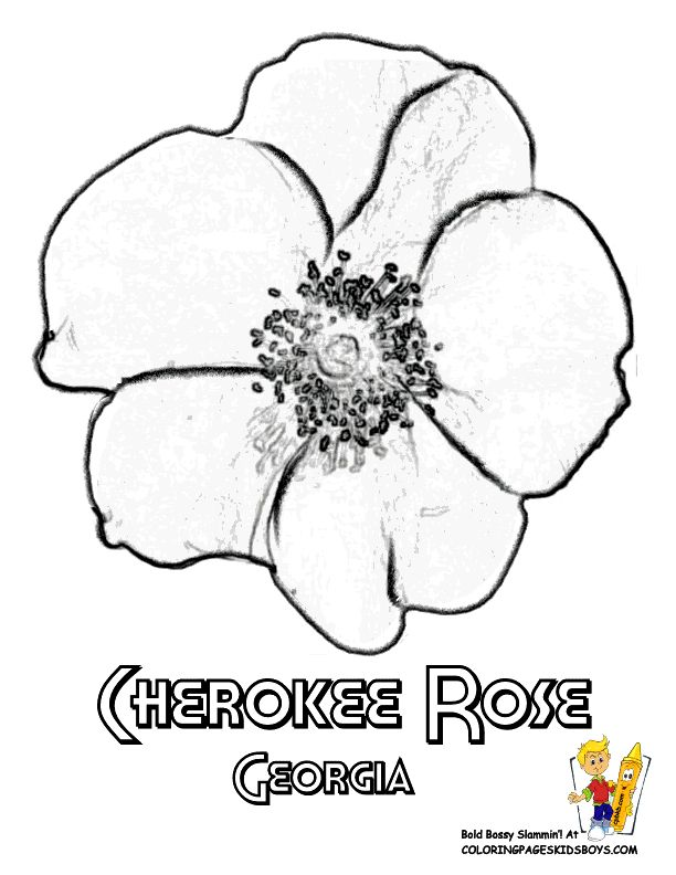 georgia state flower coloring page cherokee rose