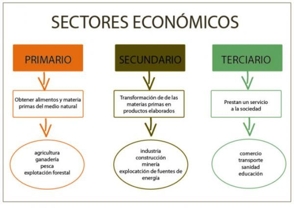 Sector Primario Secundario Y Terciario Ejemplos Esquemas Enseñanza De La Geografía Actividades Para Primaria Actividades Secundaria