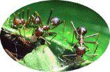 Mieren bestrijden of verdelgen op verschillende manieren