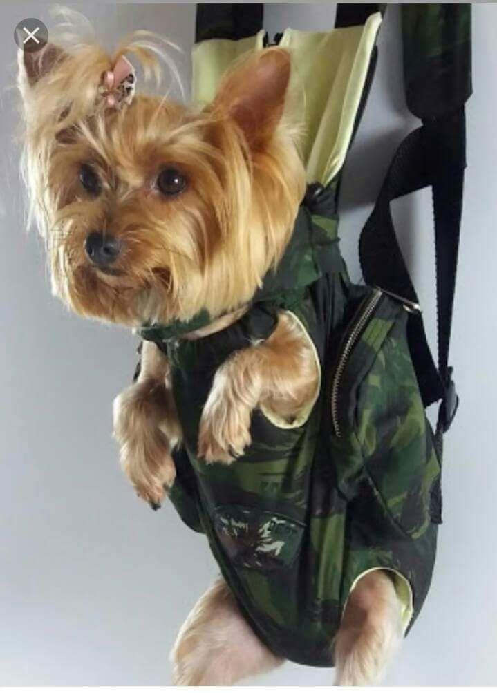 Bolsa Canguru para pets  modelagem