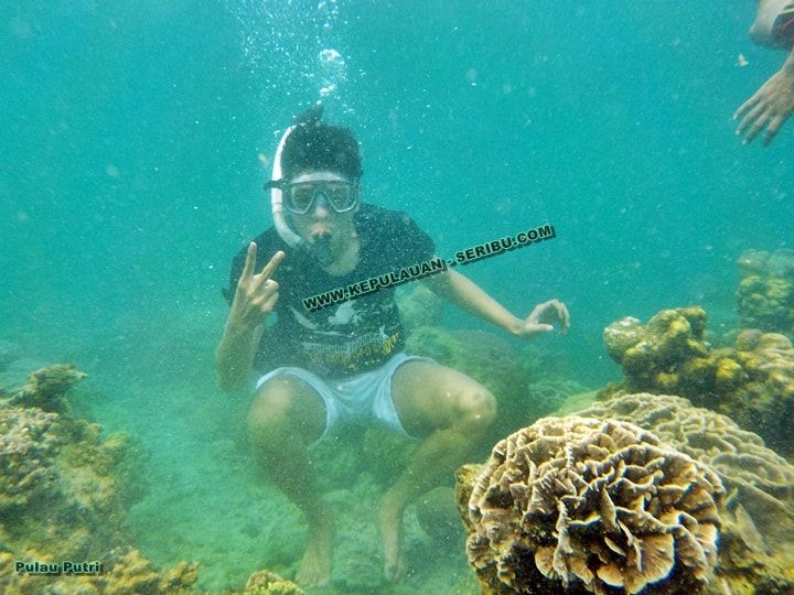 Snorkeling Pulau Putri Area - Pulau Putri Island travel has Undersea Tunnel Aquarium, Waterboom, Glass Bottom Boat which is in the interest of the foreign and local tourists. Snorkeling and scuba diving is also very in love tourists with snorkeling and diving tourists can see corals which are so beautiful with its large size and also small. Putri Island many have updated its facilities and cottages, Niagara on the Island Princess has been felt freshwater because the island has distilling…