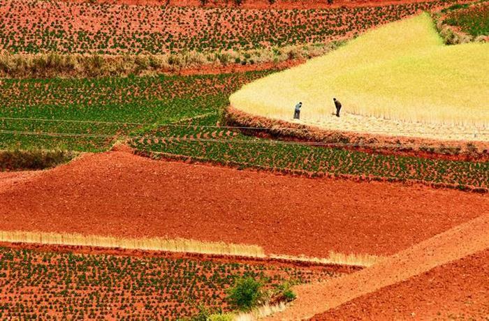 China Os deslumbrantes tons de vermelho, amarelo, laranja e verde se estendem ao longo de todos os campos, graças ao trabalho de gerações de agricultores. Cada terraço foi plantado com diferentes colheitas, em também diferentes estágios de crescimento, criando o magnífico cenário que se pode ver atualmente.
