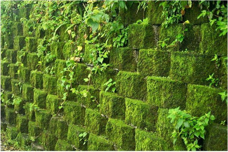 Вертикально озеленение стен мхом и растениями своими руками фото
