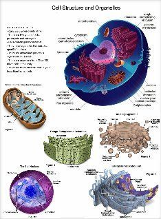 Animal Cell Structure and Organelles: text, images, music, video | Glogster EDU - 21st century multimedia tool for educators, teachers and students