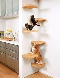 prateleiras para gatos - 2 Mais