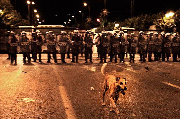 Meet Loukanikos, Athens' Protest Dog