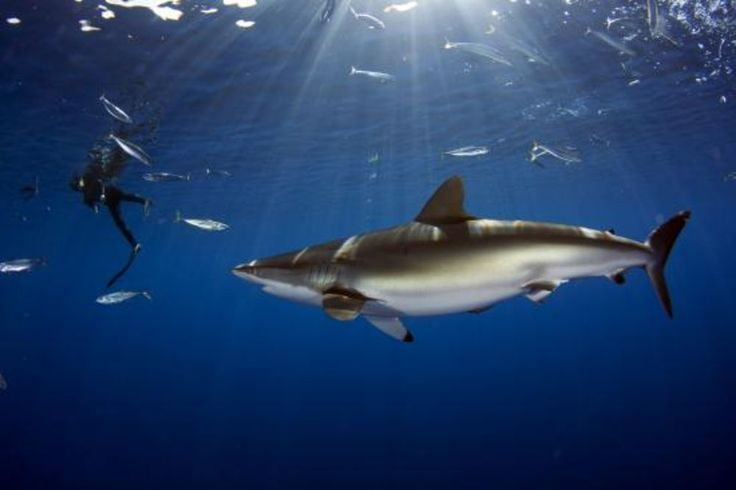 With all the buzz of the Sharknado film, we couldn't help but be a little inspired. From Bonaire to North Carolina and every dive site along the way, our readers have submitted some incredible images for our 2013 Scuba Diving Photo Contest. While they're not our winners just yet, here are 10 of our favorite shark images ... so far.
