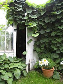 Annehem: Klätterväxter på spaljen?