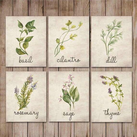 Watercolor Herb Rustic Antique Parchment Print
