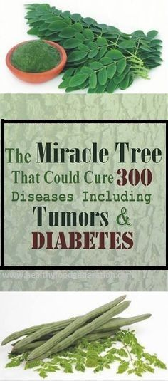 """The Moringa tree has been praised for its incredible health benefits, and has been labeled a """"miracle tree"""" in many regions around the world. It is an excellent source of protein, carbs, fats, vitamin C, iron, potassium and other nutrients. All of the tree's parts are used in nutritional supplements as well as cosmetic products. …"""
