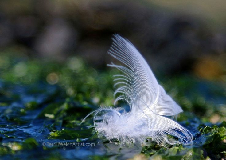 beautiful #feather ~ #Angels are everywhere