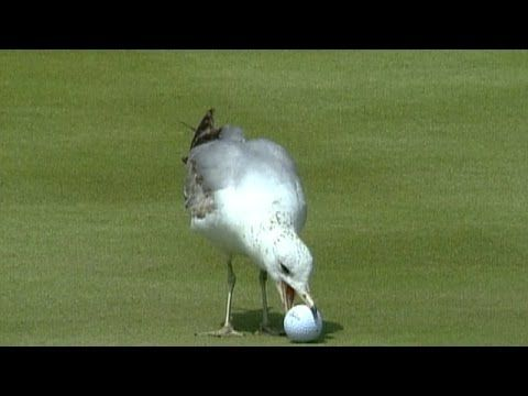 ▶ Top 10: Animal Encounters on the PGA TOUR - YouTube