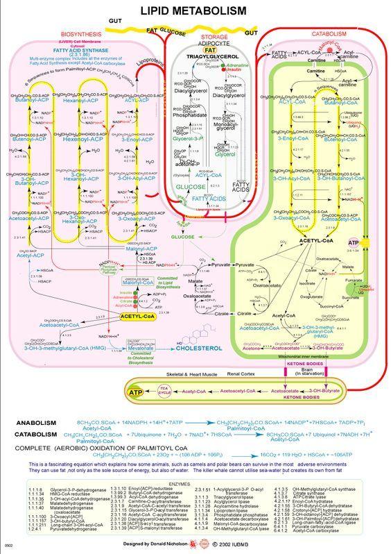 www.sigmaaldrich.com content dam sigma-aldrich life-science biochemicals migrationbiochemicals1 17.gif