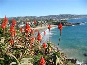 Laguna Beach, CA: Favorite Places, Image Search, Better Places, Laguna Beaches, Beaches Dreams, Beaches Favorite, Beaches Coastlin, Beaches Stuff, Crescents Bays