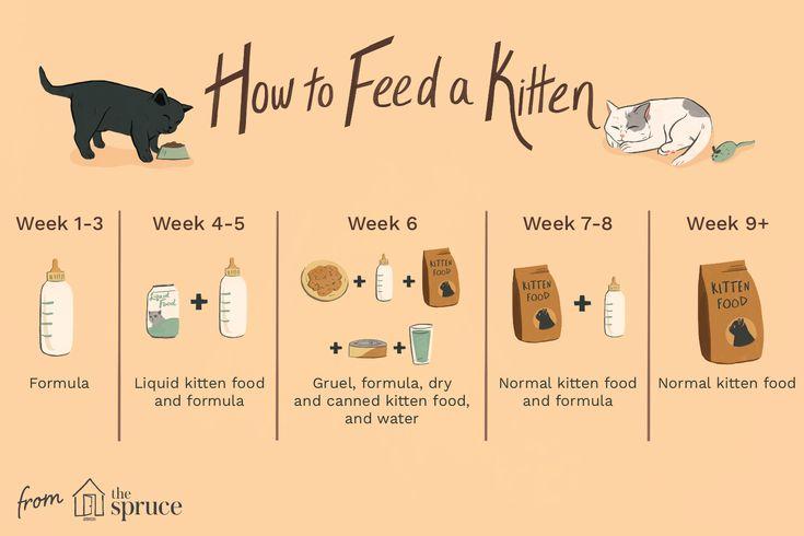 How Long Should Kittens Be Fed Kitten Food