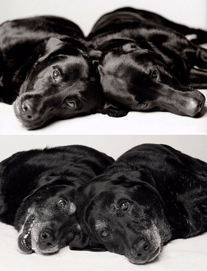 Photos show dogs aging over several years