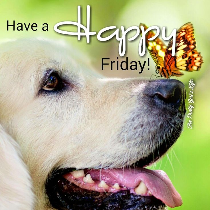 Have A Blessed And Happy Friday! Www.facebook.com