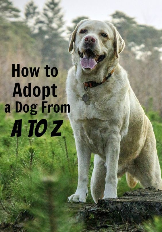 Adopting a dog can seen overwhelming. Check out how to adopt a dog from A to Z.