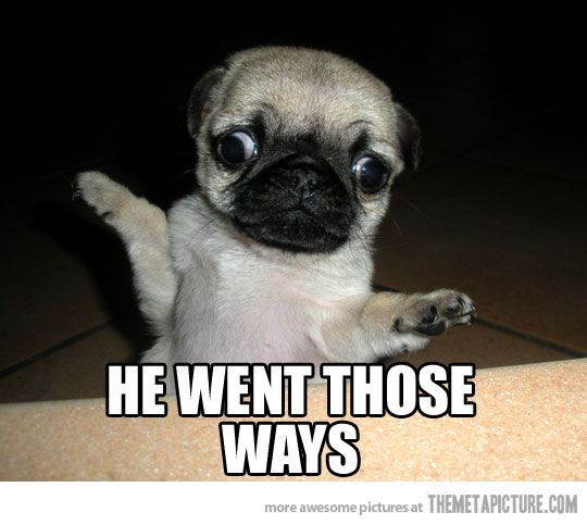 "Helpful pug says, ""He went those ways!""  ;-)"