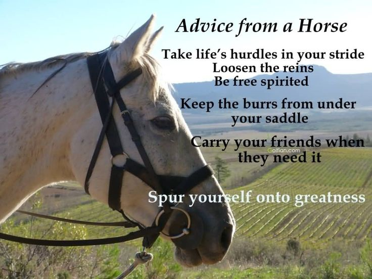 Funniest Horse Quotes