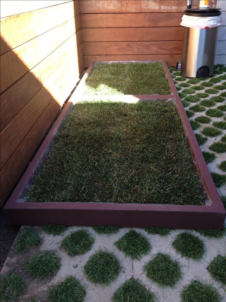 large dog grass pad boxes pushed together to create a very patch of real potty grass