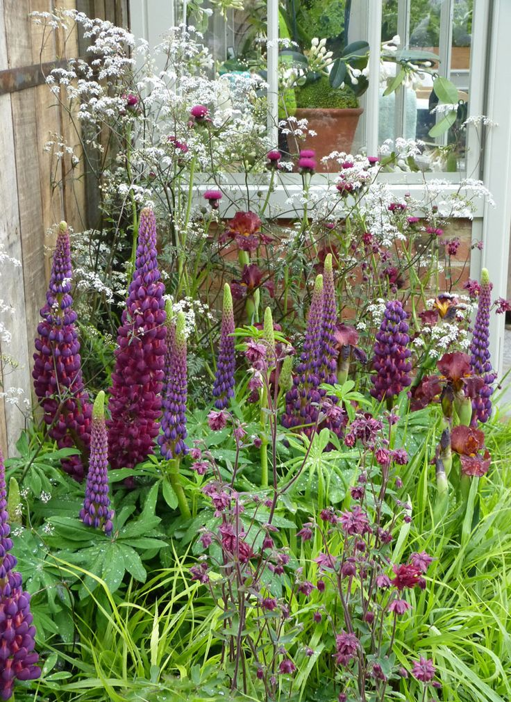 Lupins and cow parsley at RHS Chelsea Flower Show