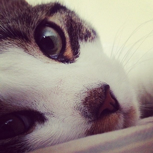 Sweet nose: Sweet Nose, Resume Exact, Baby Cats, Animales Cuties Nature, Converse Resume