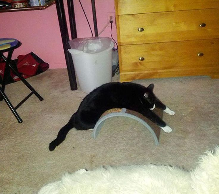 #funny #cats #funnycats