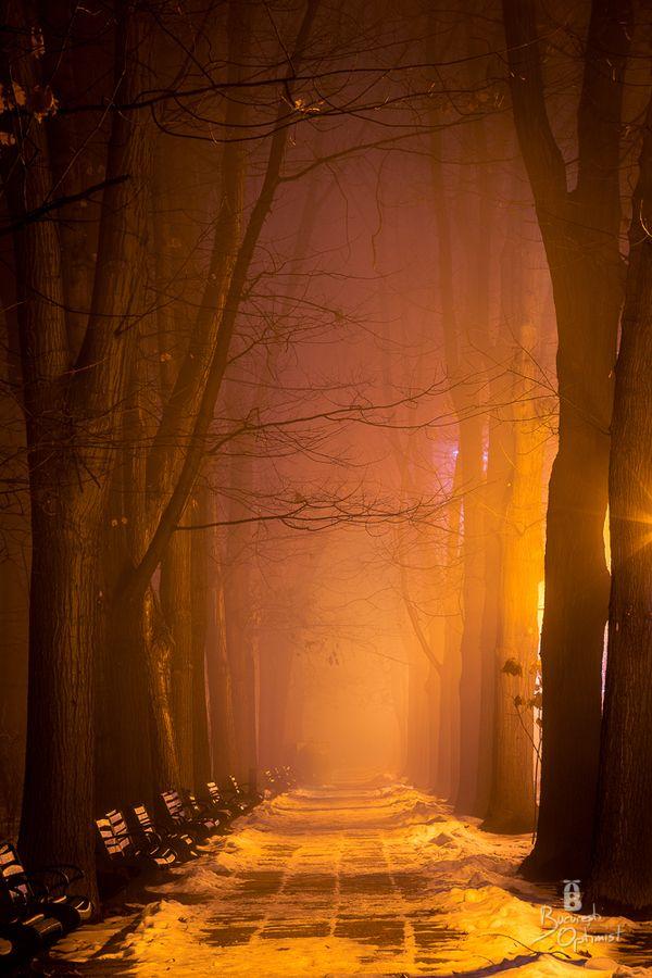 Fog in the evening, Herastrau Park, Bucharest, Romania