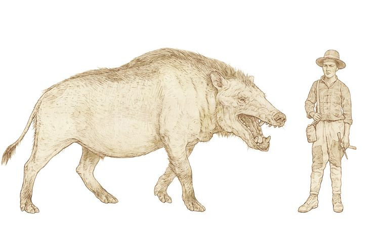 Andrewsarchus mongoliensis, a prehistoric cousin of whales