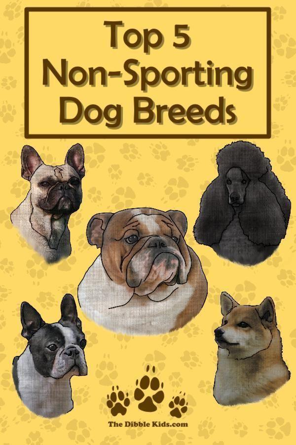 Top 5 Non Sporting Dog Breeds Dog Breeds Dog Psychology