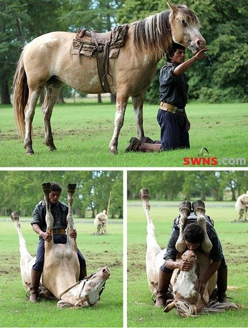 Ein Experte Pferdeflüsterer Lulls a Mare in Positionen Nobody Else würde es wagen,