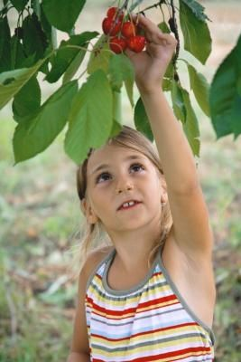 How to Make Organic Fruit Tree Spray