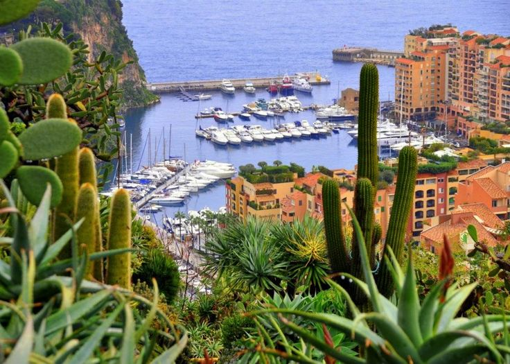 17 best images about jardines jardineria on for Jardin exotique monaco
