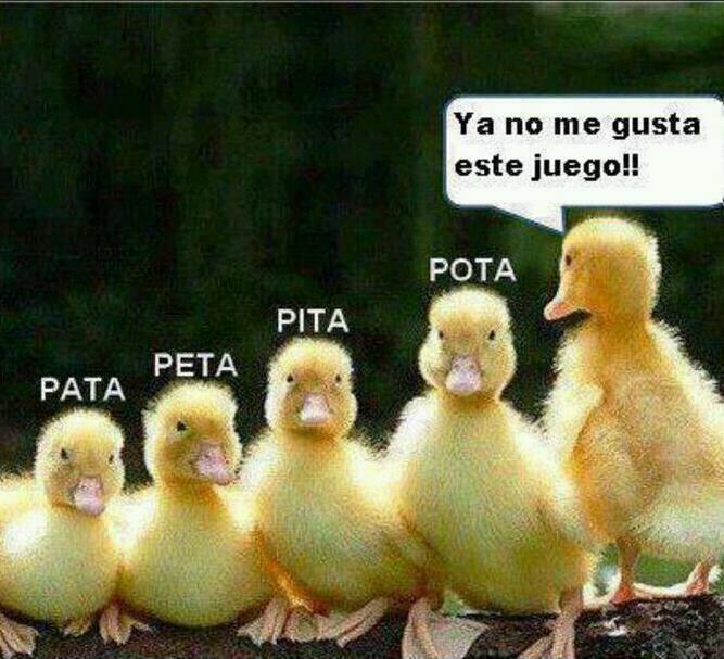 @polilla ajjaja