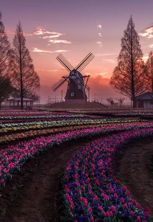 Beautiful sunset over a windmill in a field