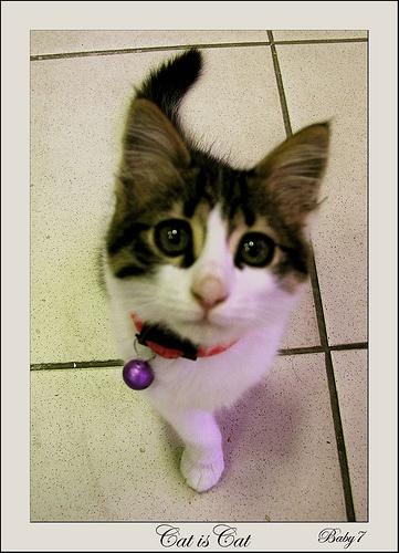 #Tekir Kediler (Tabby Cats)  Like,Repin,Share, Thanks!