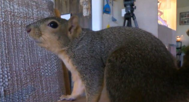 Bizarre News of the Week: Pet Squirrel Defends Home from Would-Be Gun Thief in Idaho