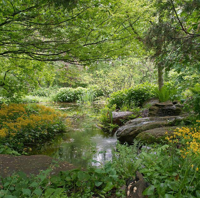 Natural wetland garden