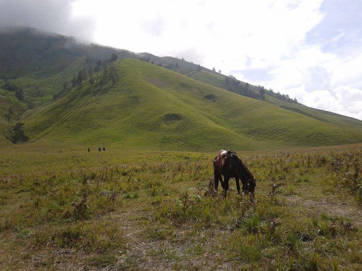 bukit teletubies - bromo area - probolinggo - jawa timur - Indonesia