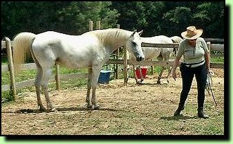 "Natural ways to help your horse relax, build trust, and help strengthen a bond.  ""It is always important to quit before the horse pulls away tired of something, but instead leave him wishing for more. This psychologically bonds them to you more deeply, them wanting to be with you even more."""