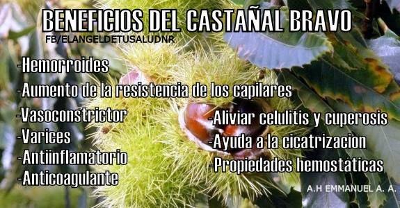 BENEFICIOS DEL CASTAÑAL BRAVO O CASTAÑO DE INDIAS