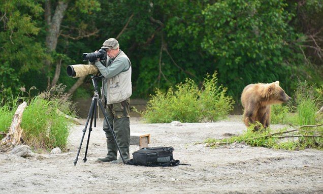 So long as I don't make a sound, those bears will never know I'm here… Photographer sets up tripod and camouflage gear - unaware there is a giant bear right behind him