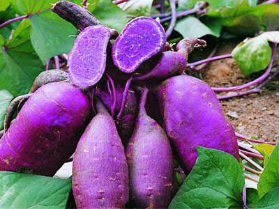 Purple Sweet Potato Nutrition & Incredible Health Benefits For Human, Better Than Potatoes : Healthfame.com